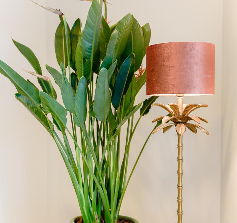 Strelitzia plant voor kantoor