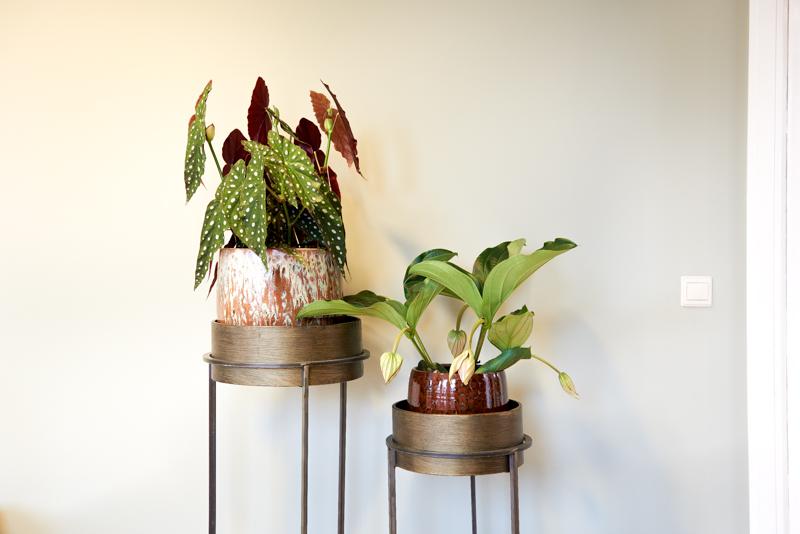 Planten in interieur kantoor